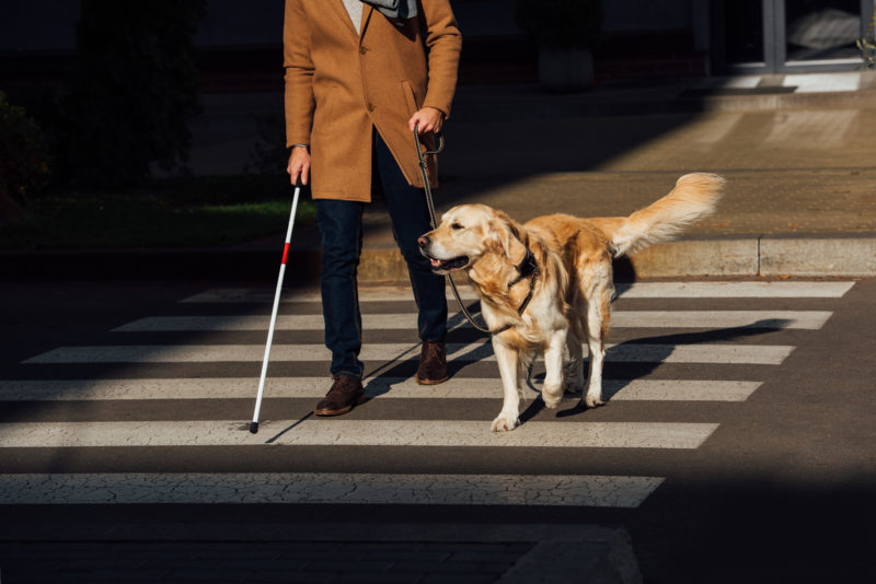 a blind man navigating a crosswalk in Los Angeles with the help of a service animal
